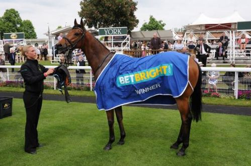 Who will be wearing the Betbright winners rug after the 4.10 race? (click logo)